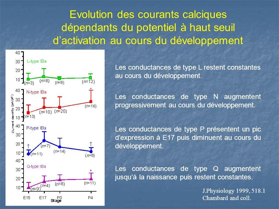 Evolution des courants calciques dépendants du potentiel à haut seuil dactivation au cours du développement Les conductances de type L restent constan