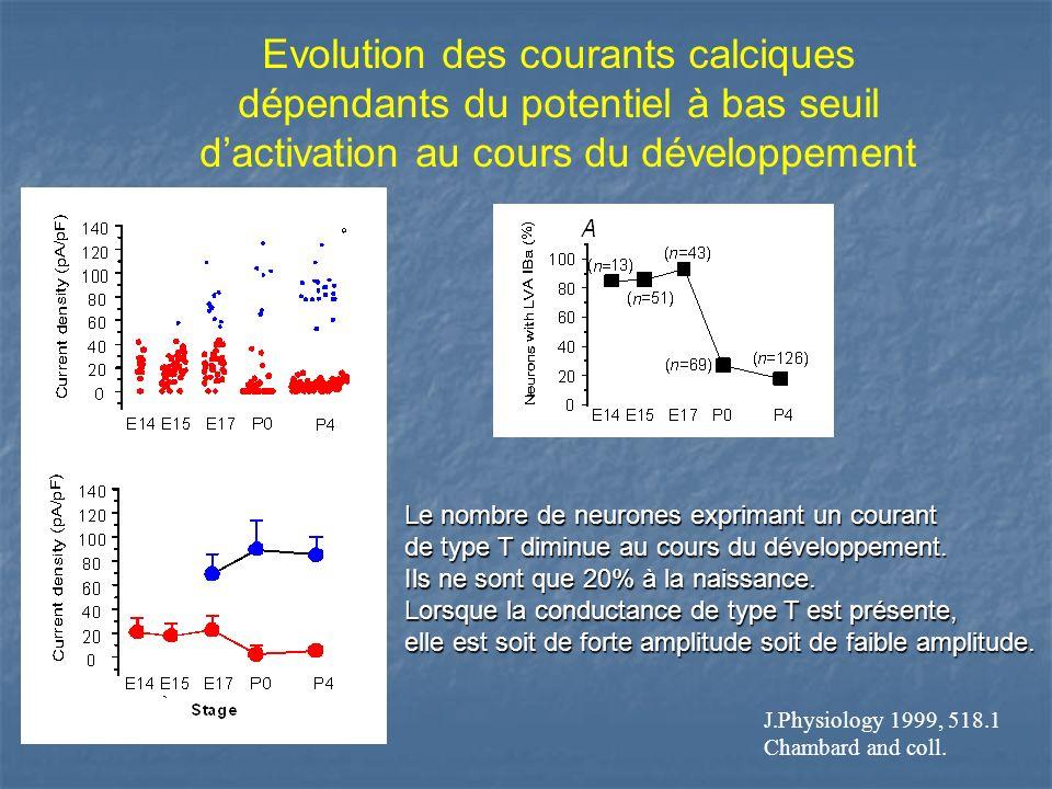 Evolution des courants calciques dépendants du potentiel à bas seuil dactivation au cours du développement Le nombre de neurones exprimant un courant