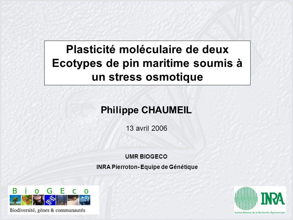 UMR BIOGECO INRA Pierroton- Equipe de Génétique Plasticité moléculaire de deux Ecotypes de pin maritime soumis à un stress osmotique Philippe CHAUMEIL