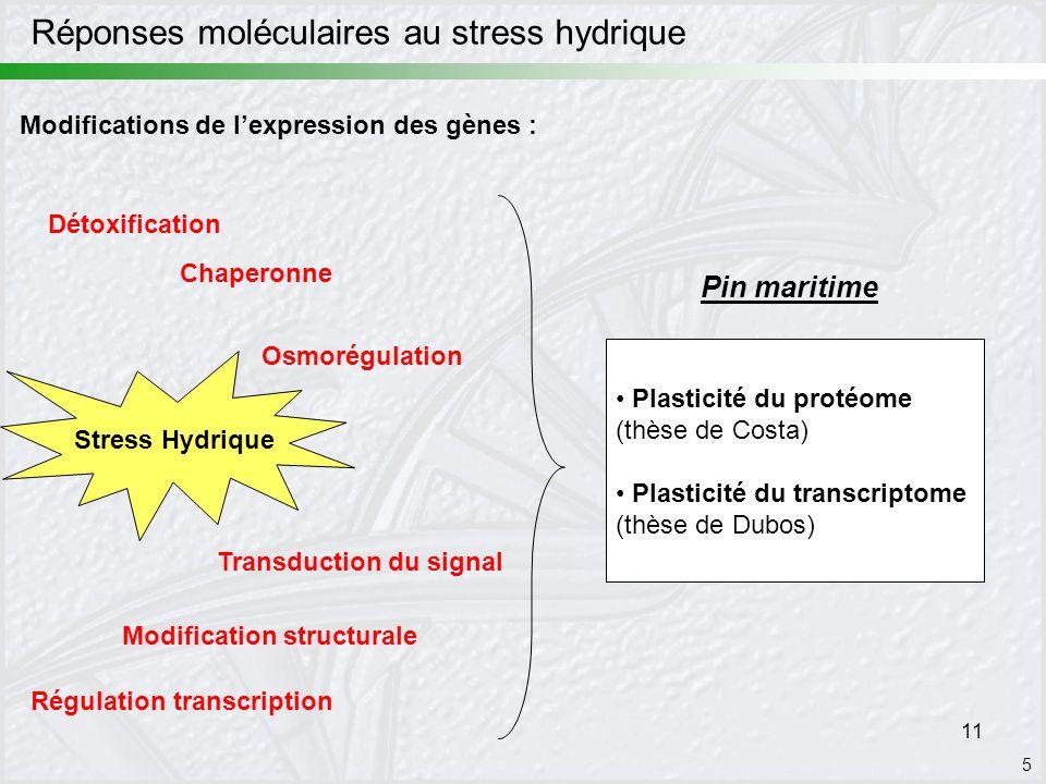 11 Stress Hydrique Détoxification Chaperonne Osmorégulation Modification structurale Régulation transcription Transduction du signal 5 Modifications d