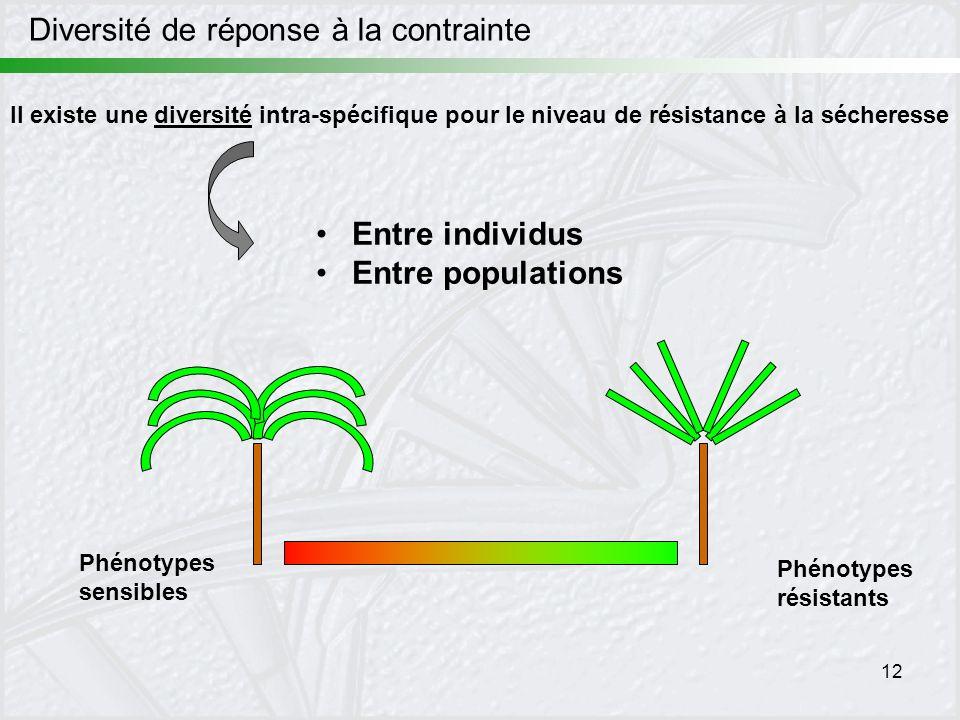 12 Diversité de réponse à la contrainte Il existe une diversité intra-spécifique pour le niveau de résistance à la sécheresse Phénotypes sensibles Phé