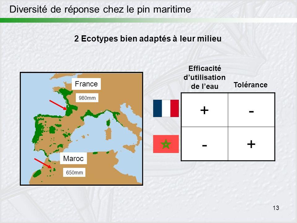 13 France Maroc 650mm 980mm Diversité de réponse chez le pin maritime +- -+ Efficacité dutilisation de leau Tolérance 2 Ecotypes bien adaptés à leur m