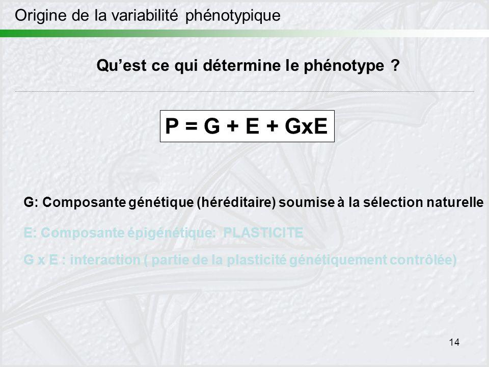 14 Origine de la variabilité phénotypique Quest ce qui détermine le phénotype ? P = G + E + GxE G: Composante génétique (héréditaire) soumise à la sél