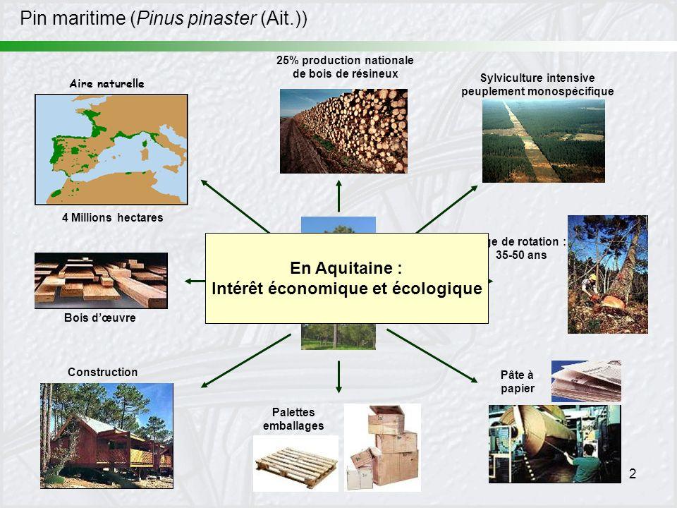 2 Pin maritime (Pinus pinaster (Ait.)) Aire naturelle 4 Millions hectares 25% production nationale de bois de résineux Sylviculture intensive peupleme