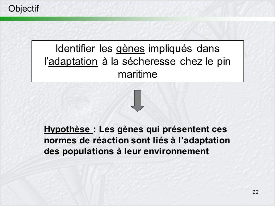 22 Objectif Identifier les gènes impliqués dans ladaptation à la sécheresse chez le pin maritime Hypothèse : Les gènes qui présentent ces normes de ré