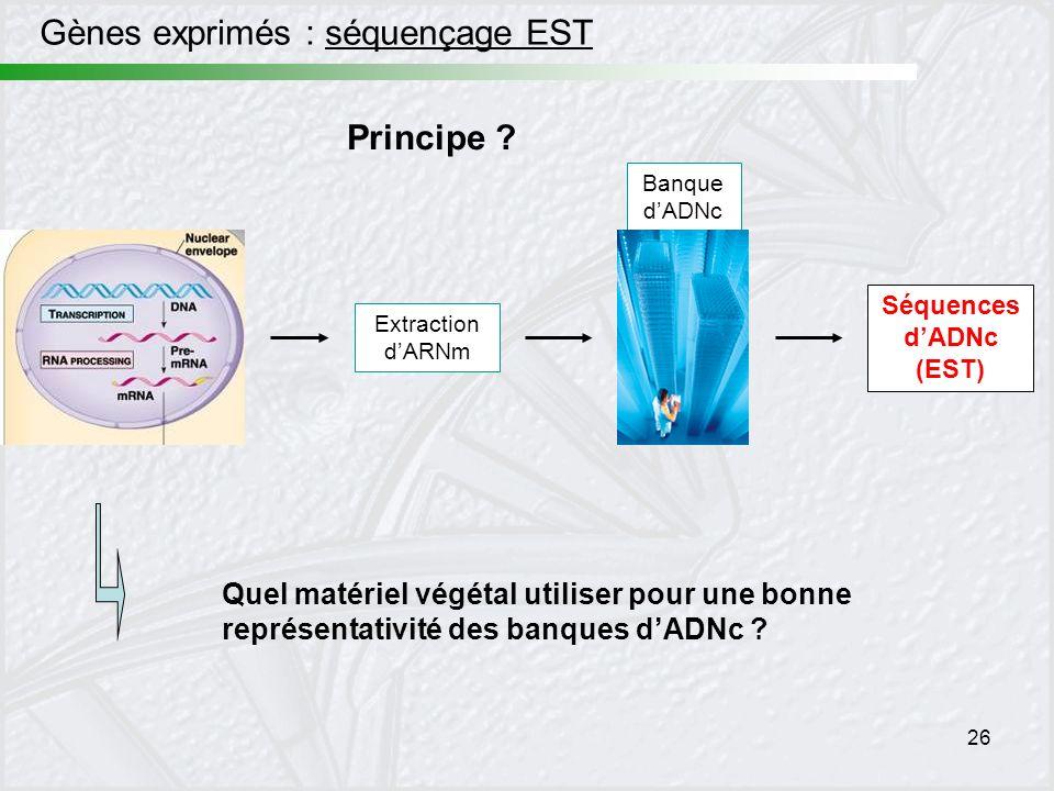 26 Gènes exprimés : séquençage EST Extraction dARNm Séquences dADNc (EST) Banque dADNc Principe ? Quel matériel végétal utiliser pour une bonne représ