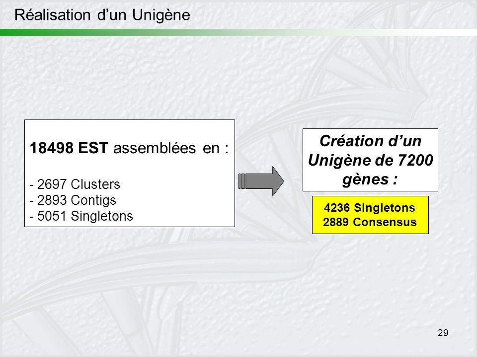 29 18498 EST assemblées en : - 2697 Clusters - 2893 Contigs - 5051 Singletons Création dun Unigène de 7200 gènes : 4236 Singletons 2889 Consensus Réal