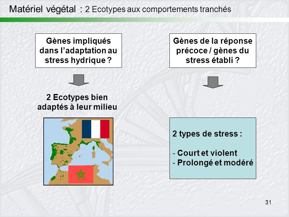 31 Matériel végétal : 2 Ecotypes aux comportements tranchés 2 Ecotypes bien adaptés à leur milieu Gènes impliqués dans ladaptation au stress hydrique