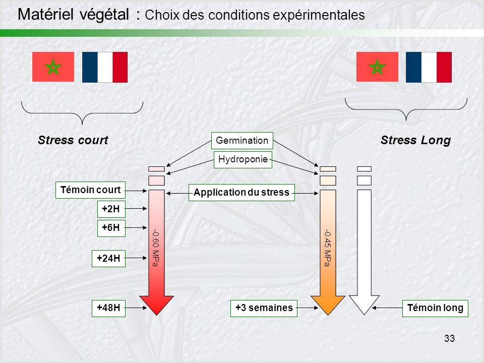 33 Stress court -0.60 MPa Témoin court +2H +6H +24H +48H Application du stress Hydroponie Germination Stress Long -0.45 MPa +3 semainesTémoin long Mat