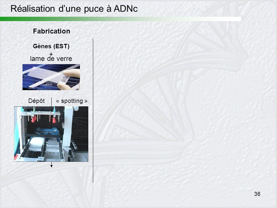 36 Fabrication Réalisation dune puce à ADNc Gènes (EST) + lame de verre Dépôt« spotting »