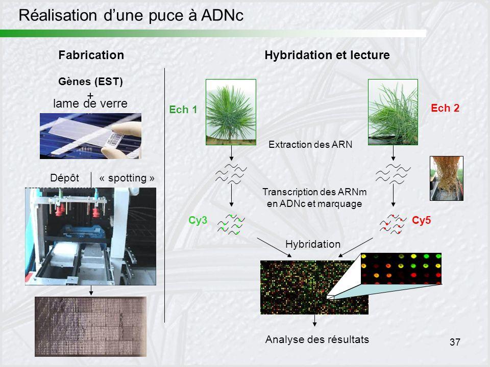 37 Fabrication Réalisation dune puce à ADNc Gènes (EST) + lame de verre Dépôt« spotting » Ech 1 Analyse des résultats Hybridation et lecture Ech 2 Ext
