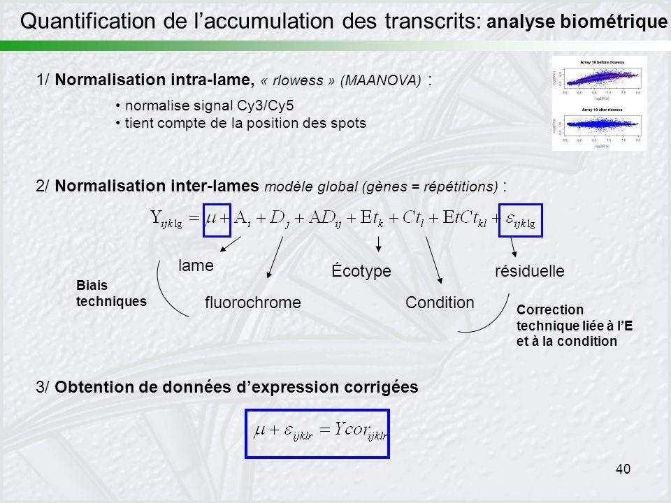 40 3/ Obtention de données dexpression corrigées 2/ Normalisation inter-lames modèle global (gènes = répétitions) : résiduelle lame fluorochrome Biais