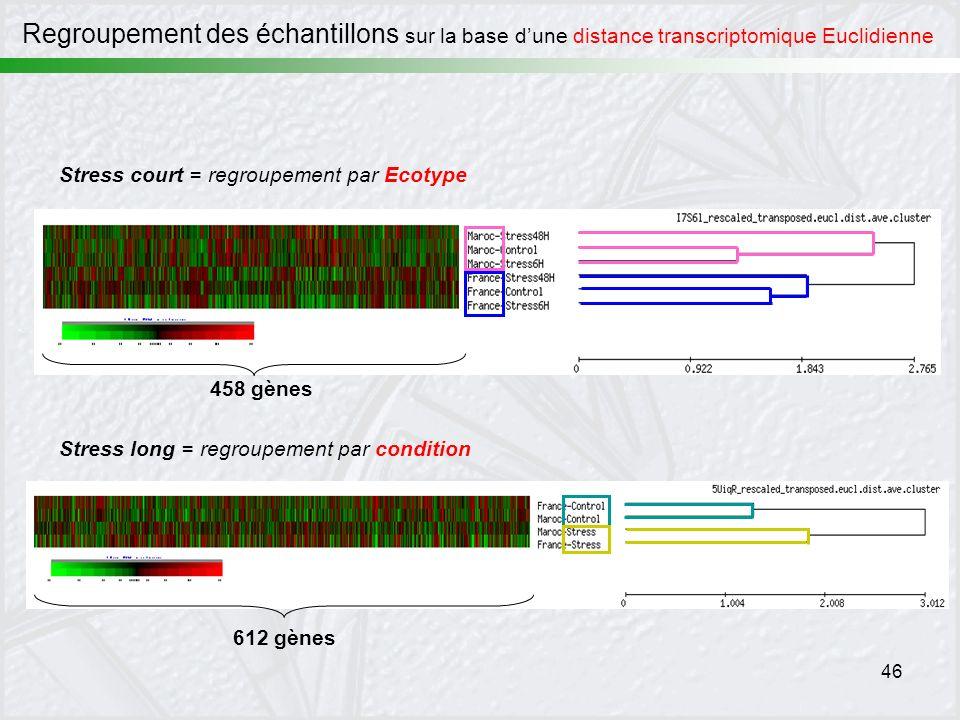 46 Stress court = regroupement par Ecotype 458 gènes Stress long = regroupement par condition 612 gènes Regroupement des échantillons sur la base dune