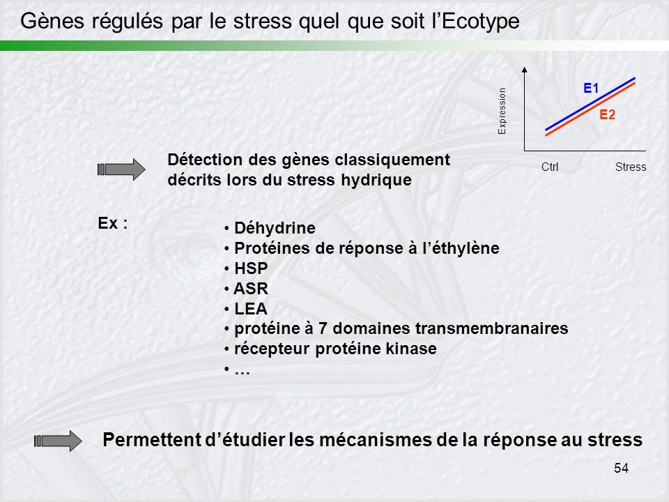 54 Gènes régulés par le stress quel que soit lEcotype Expression CtrlStress E1 E2 Détection des gènes classiquement décrits lors du stress hydrique Dé