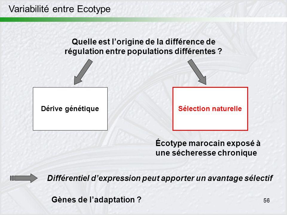 56 Quelle est lorigine de la différence de régulation entre populations différentes ? Dérive génétique Sélection naturelle Écotype marocain exposé à u