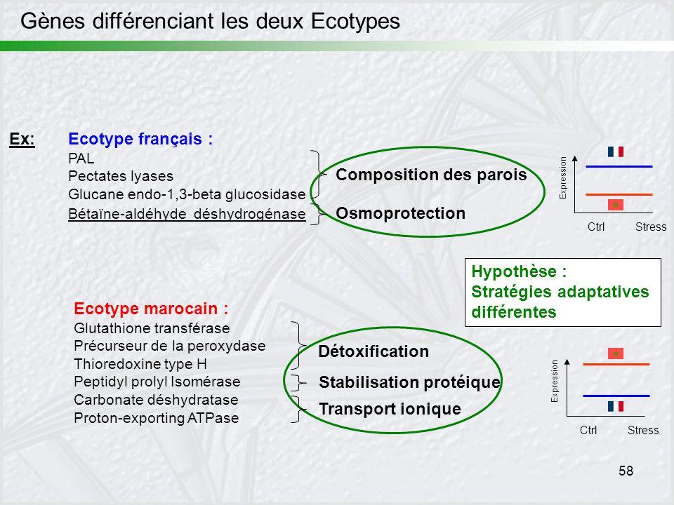 58 Gènes différenciant les deux Ecotypes Hypothèse : Stratégies adaptatives différentes Ex:Ecotype français : PAL Pectates lyases Glucane endo-1,3-bet