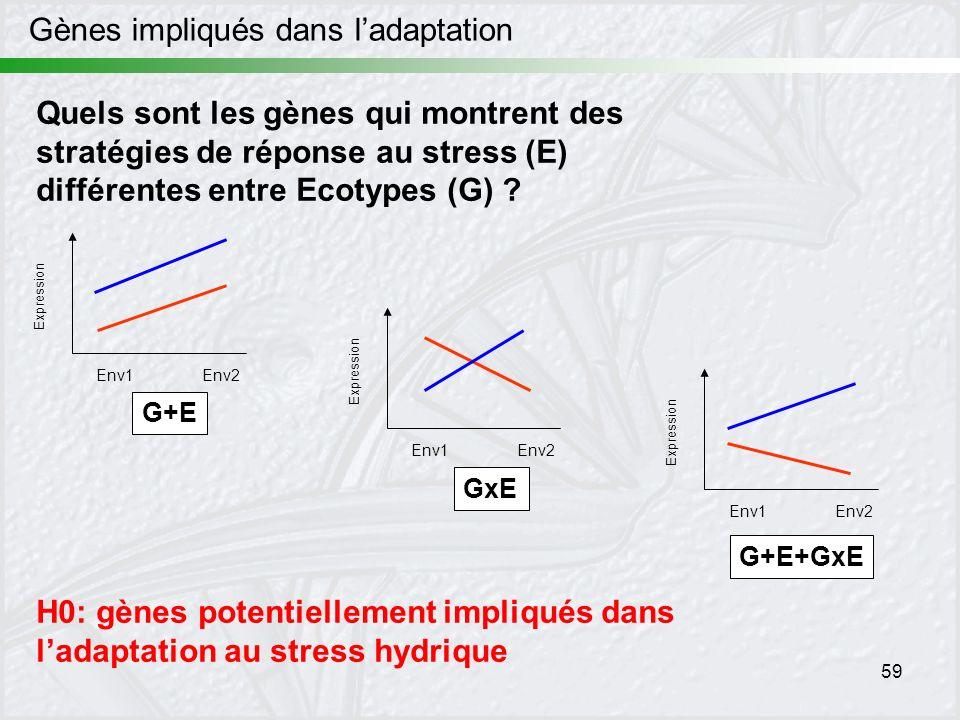 59 Gènes impliqués dans ladaptation Quels sont les gènes qui montrent des stratégies de réponse au stress (E) différentes entre Ecotypes (G) ? H0: gèn