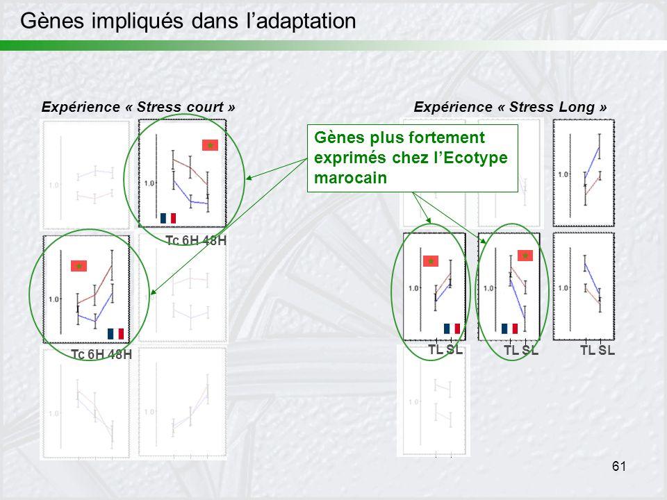 61 Expérience « Stress court »Expérience « Stress Long » TL SL Tc 6H 48H Gènes plus fortement exprimés chez lEcotype marocain Gènes impliqués dans lad