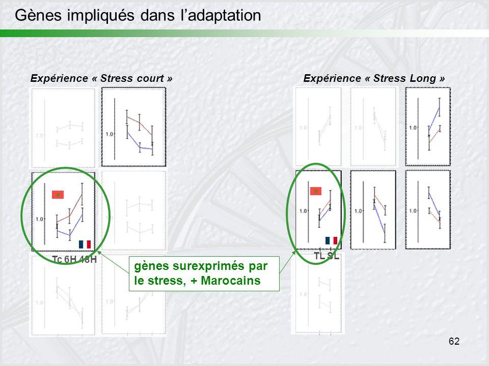 62 Expérience « Stress court »Expérience « Stress Long » TL SL Tc 6H 48H gènes surexprimés par le stress, + Marocains Gènes impliqués dans ladaptation