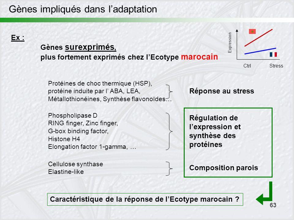 63 Expression CtrlStress Ex : Gènes surexprimés, plus fortement exprimés chez lEcotype marocain Protéines de choc thermique (HSP), protéine induite pa