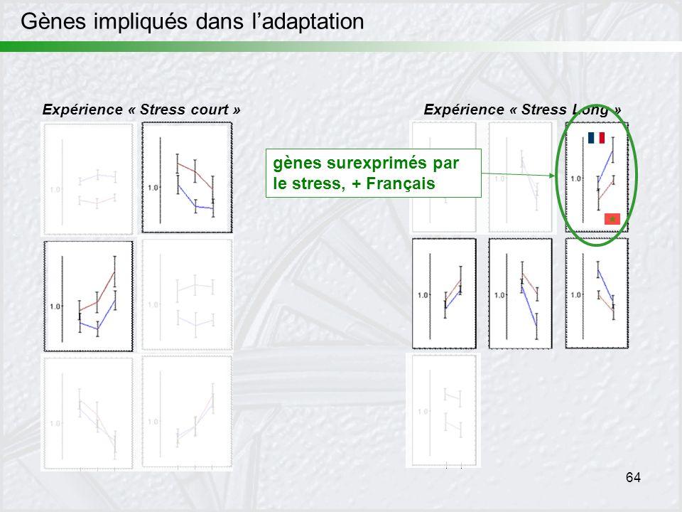 64 Expérience « Stress court »Expérience « Stress Long » gènes surexprimés par le stress, + Français Gènes impliqués dans ladaptation