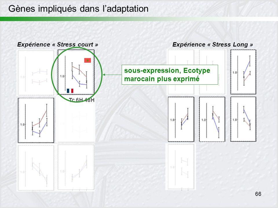 66 Expérience « Stress court »Expérience « Stress Long » Tc 6H 48H sous-expression, Ecotype marocain plus exprimé Gènes impliqués dans ladaptation
