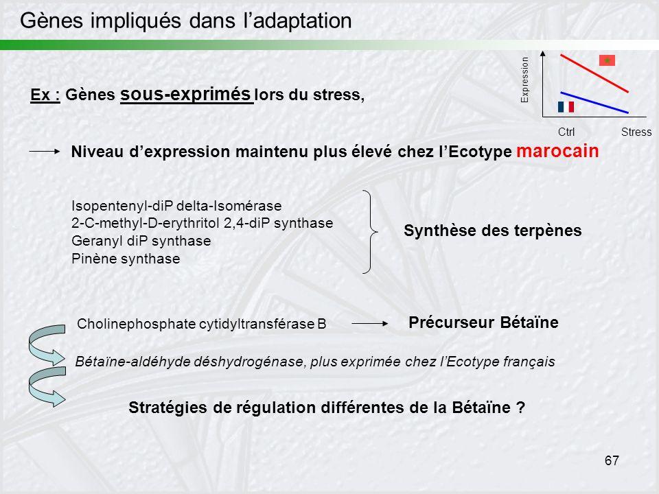 67 Expression CtrlStress Ex : Gènes sous-exprimés lors du stress, Niveau dexpression maintenu plus élevé chez lEcotype marocain Isopentenyl-diP delta-