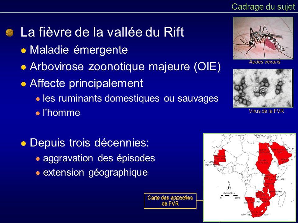Mécanismes de transmission Cadrage du sujet Cycle épidémiologique simplifié de la FVR Pas de traitement spécifique Prévention Vaccinations ciblées Recommandations en cas de foyer Intérêt de la modélisation