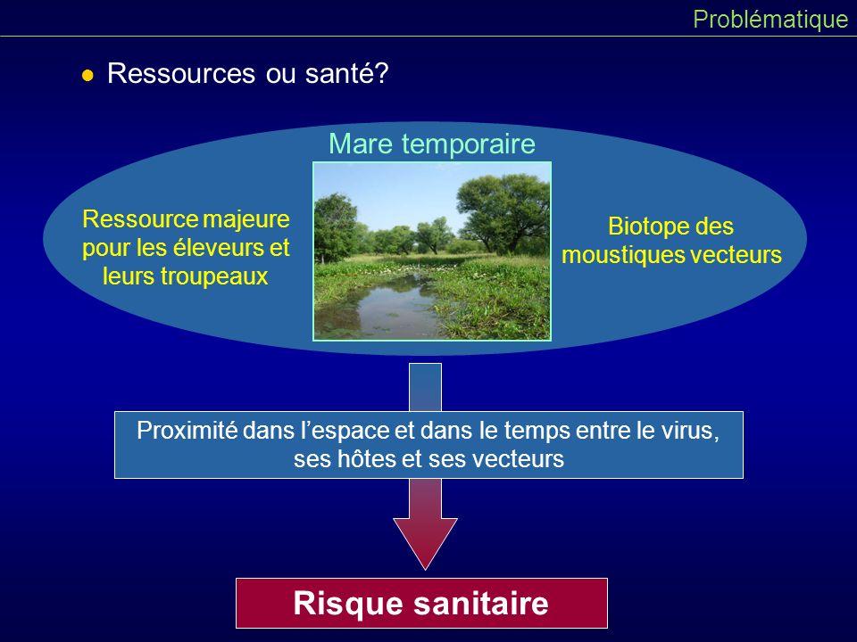 Complexité du système de la FVR à Barkedji Plusieurs hôtes possibles et réservoirs éventuels Plusieurs modes dintroduction du virus 2 espèces principales de vecteurs Problématique Homme Virus de la FVR Aedes sp.