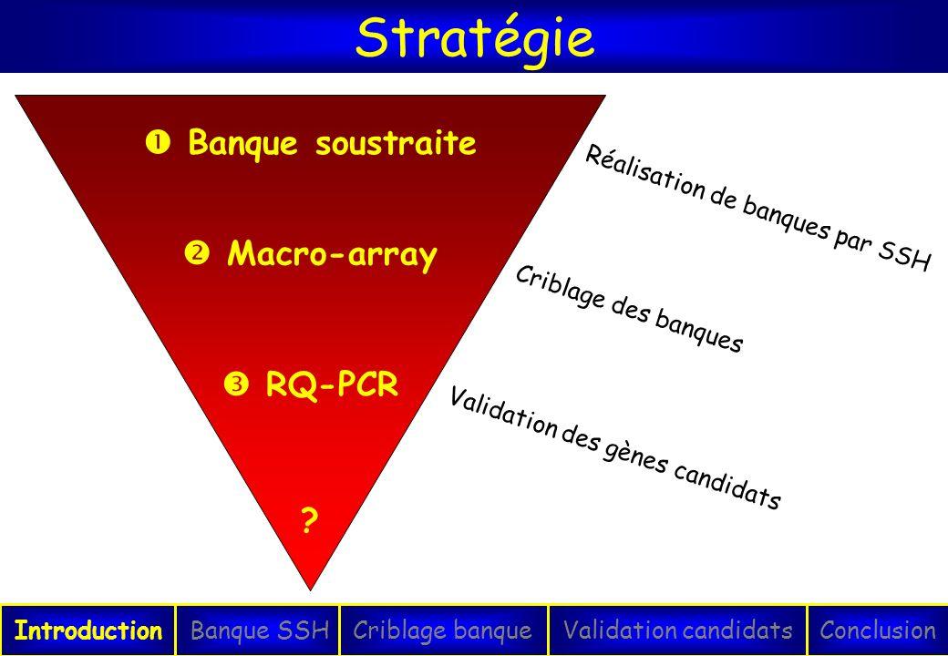 Stratégie IntroductionConclusionBanque SSHCriblage banqueValidation candidats Banque soustraite Macro-array RQ-PCR ? Réalisation de banques par SSH Cr