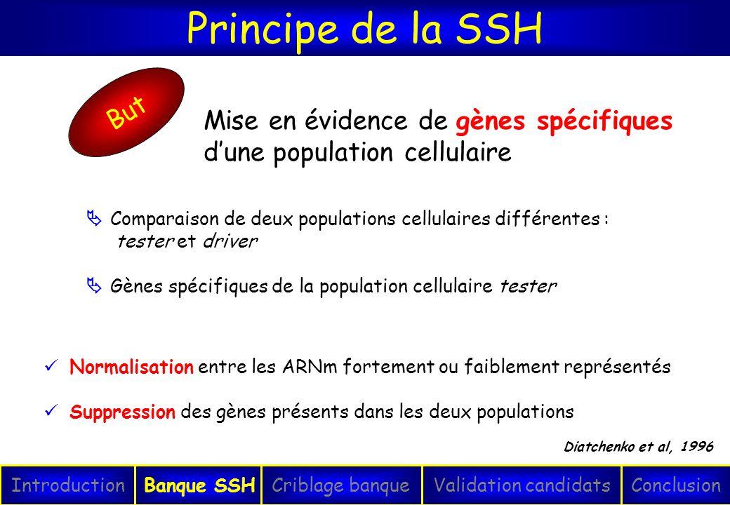 Principe de la SSH IntroductionConclusionBanque SSHCriblage banqueValidation candidats Diatchenko et al, 1996 Comparaison de deux populations cellulai