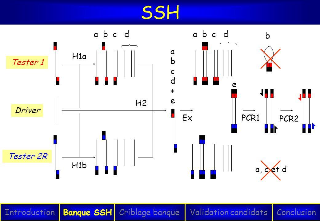 SSH IntroductionConclusionBanque SSHCriblage banqueValidation candidats PCR2 PCR1 a, c et d b Tester 1 Tester 2R Driver H1b H1a a b c d abcd+eabcd+e H