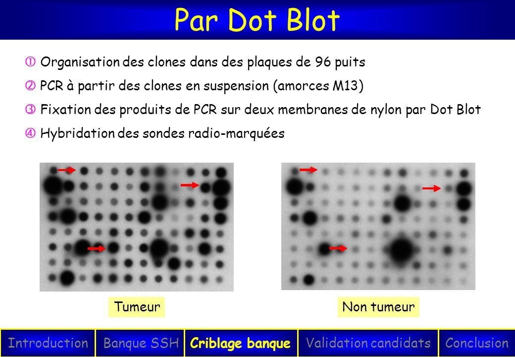 Par Dot Blot IntroductionConclusionBanque SSHCriblage banqueValidation candidats TumeurNon tumeur Organisation des clones dans des plaques de 96 puits