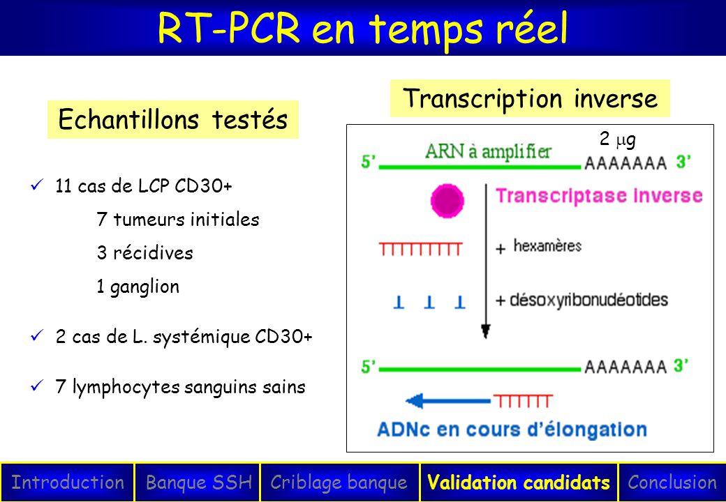RT-PCR en temps réel IntroductionConclusionBanque SSHCriblage banqueValidation candidats Transcription inverse 2 g 11 cas de LCP CD30+ 7 tumeurs initi