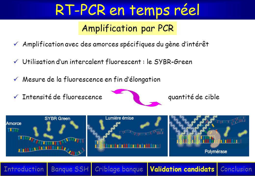 RT-PCR en temps réel IntroductionConclusionBanque SSHCriblage banqueValidation candidats Amplification avec des amorces spécifiques du gène dintérêt U