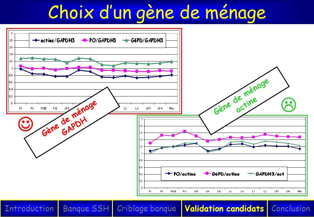 Choix dun gène de ménage IntroductionConclusionBanque SSHCriblage banqueValidation candidats Gène de ménage GAPDH Gène de ménage actine