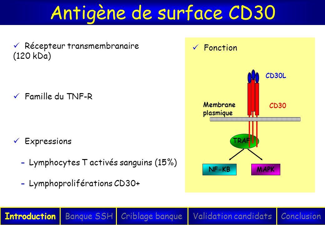 Antigène de surface CD30 IntroductionConclusionBanque SSHCriblage banqueValidation candidats Expressions - Lymphocytes T activés sanguins (15%) - Lymp