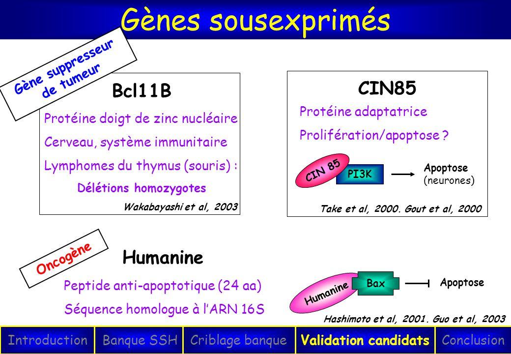 Gènes sousexprimés IntroductionConclusionBanque SSHCriblage banqueValidation candidats Protéine doigt de zinc nucléaire Cerveau, système immunitaire L