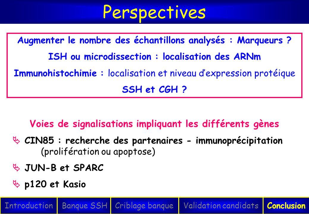 Perspectives IntroductionConclusionBanque SSHCriblage banqueValidation candidats Augmenter le nombre des échantillons analysés : Marqueurs ? ISH ou mi