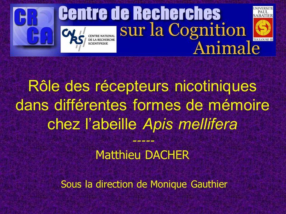 Rôle des récepteurs nicotiniques dans différentes formes de mémoire chez labeille Apis mellifera ----- Matthieu DACHER Sous la direction de Monique Ga