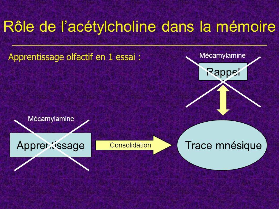 Rôle de lacétylcholine dans la mémoire Apprentissage Trace mnésique Consolidation Rappel Apprentissage olfactif en 1 essai : Mécamylamine