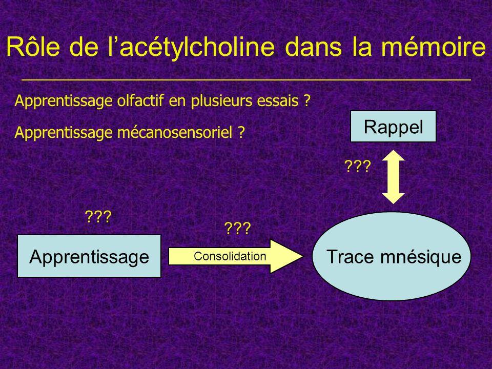 Rôle de lacétylcholine dans la mémoire Apprentissage Trace mnésique Consolidation Rappel Apprentissage olfactif en plusieurs essais ? Apprentissage mé