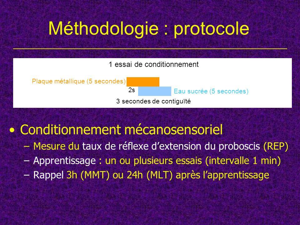 Conditionnement mécanosensoriel –Mesure du taux de réflexe dextension du proboscis (REP) –Apprentissage : un ou plusieurs essais (intervalle 1 min) –R