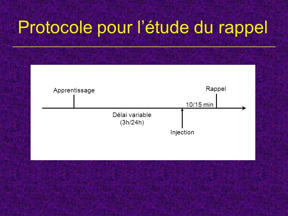 Protocole pour létude du rappel Rappel Apprentissage Délai variable (3h/24h) Injection 10/15 min