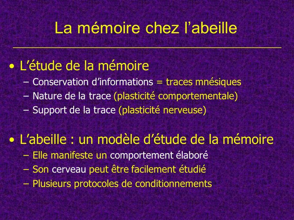 La mémoire chez labeille Létude de la mémoire –Conservation dinformations = traces mnésiques –Nature de la trace (plasticité comportementale) –Support