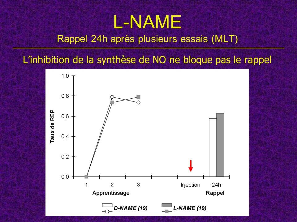 L-NAME Rappel 24h après plusieurs essais (MLT) Linhibition de la synthèse de NO ne bloque pas le rappel