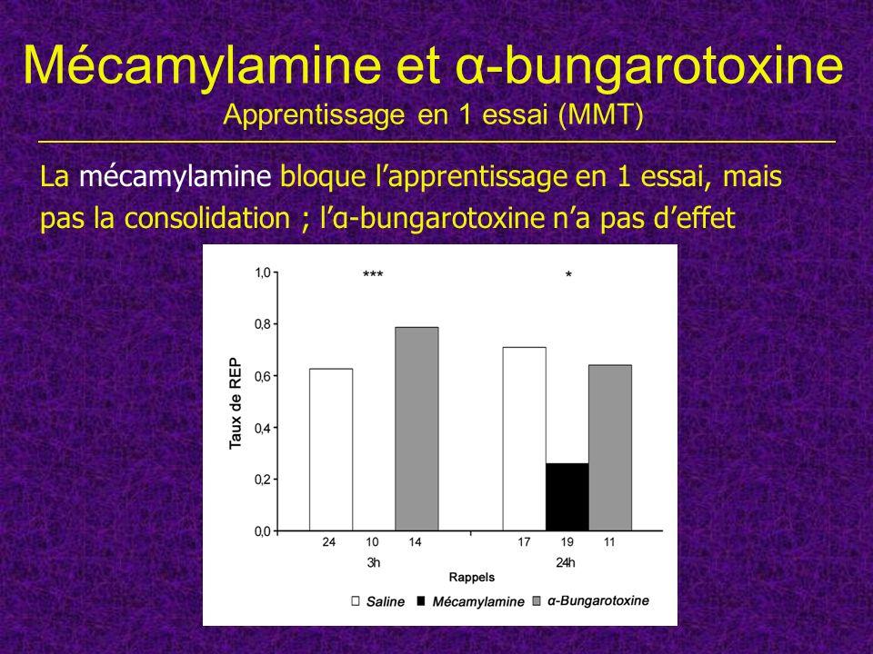 Mécamylamine et α-bungarotoxine Apprentissage en 1 essai (MMT) La mécamylamine bloque lapprentissage en 1 essai, mais pas la consolidation ; lα-bungar