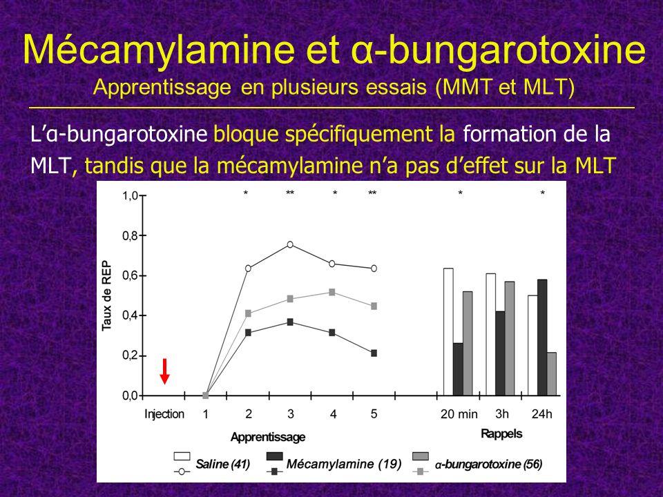 Mécamylamine et α-bungarotoxine Apprentissage en plusieurs essais (MMT et MLT) Lα-bungarotoxine bloque spécifiquement la formation de la MLT, tandis q