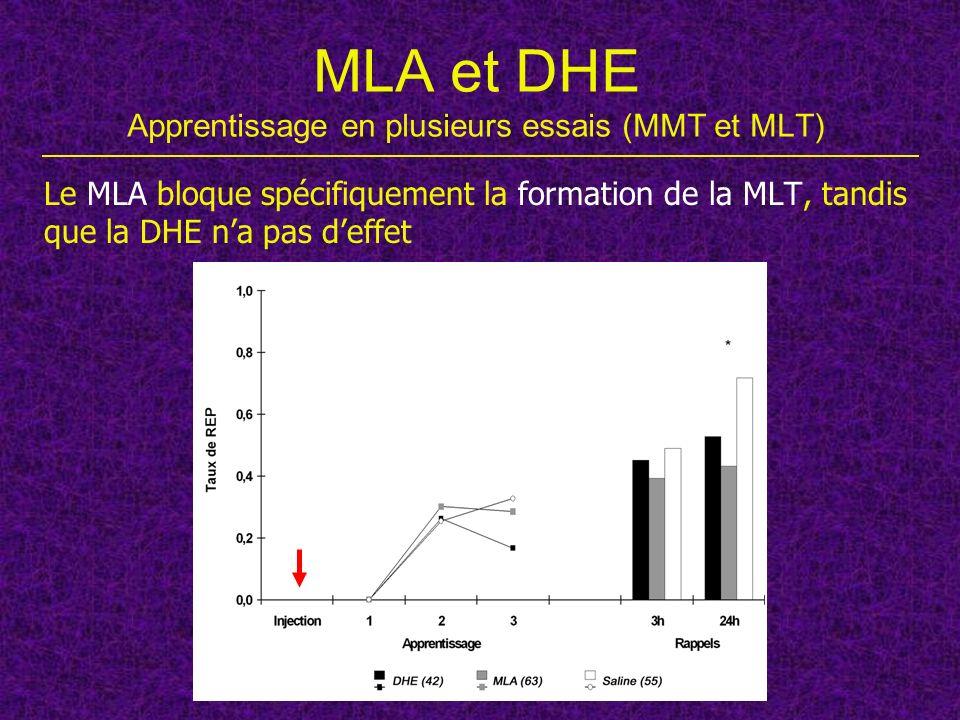 MLA et DHE Apprentissage en plusieurs essais (MMT et MLT) Le MLA bloque spécifiquement la formation de la MLT, tandis que la DHE na pas deffet