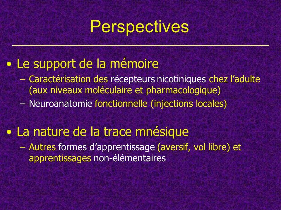 Perspectives Le support de la mémoire –Caractérisation des récepteurs nicotiniques chez ladulte (aux niveaux moléculaire et pharmacologique) –Neuroana